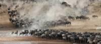 Breathtaking wildebeest migration though the Serengeti   Kyle Super