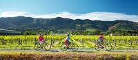 Cycling along the Nelson Great Taste Trail | Dean McKenzie