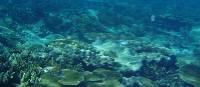 Stunning coral gardens   Blake Reid