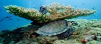 Beautiful underwater scenes